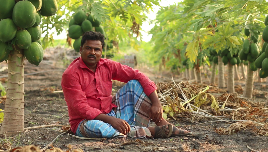 deshpande-foundation-neer-sichana-farmer-praveen-with-his-papaya-crop-resized-for-web